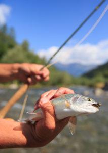 Fliegenfischen No Kill Passeiertal
